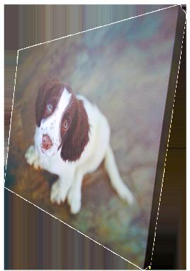 Canvas_dog